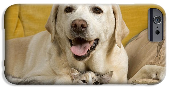 Mixed Labrador Retriever iPhone Cases - Labrador With Cat iPhone Case by Jean-Michel Labat
