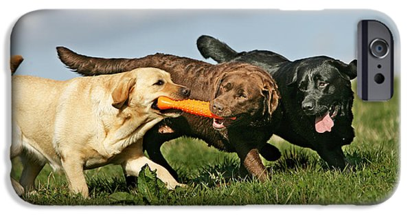 Chocolate Lab iPhone Cases - Labradors Playing With Toy iPhone Case by Jean-Michel Labat