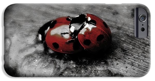 Silly iPhone Cases - Lady Bug Love iPhone Case by Martin Newman