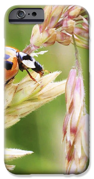 Lady Bug on a Warm Summer Day iPhone Case by Andrew Pacheco