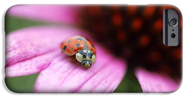 Cone Flowers iPhone Cases - Lady of Summer iPhone Case by Darren Fisher
