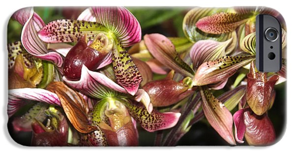 Shape iPhone Cases - Lady Slipper Orchids iPhone Case by Venetia Featherstone-Witty