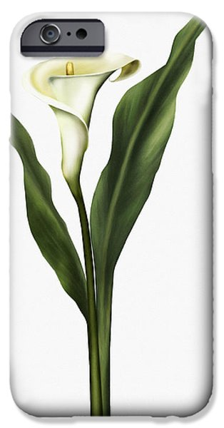 Calla Lilly iPhone Cases - Lady So Pure iPhone Case by Georgiana Romanovna