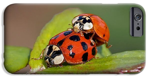 Ladybug iPhone Cases - Ladybird Coupling iPhone Case by Rona Black