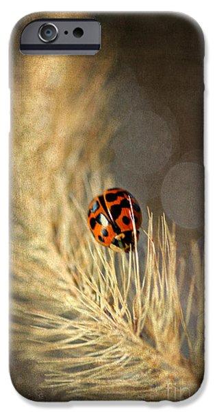 Ladybird iPhone Case by Darren Fisher