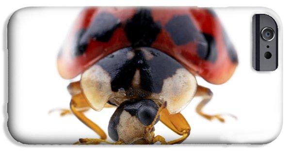 Fauna iPhone Cases - Ladybird macro iPhone Case by Jane Rix