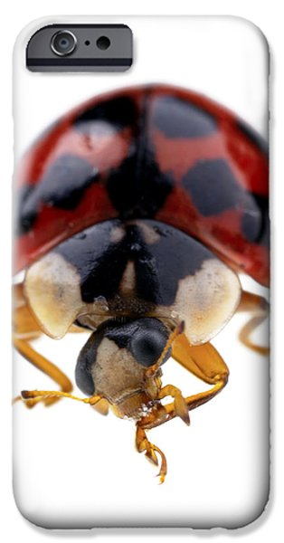 Ladybird macro iPhone Case by Jane Rix