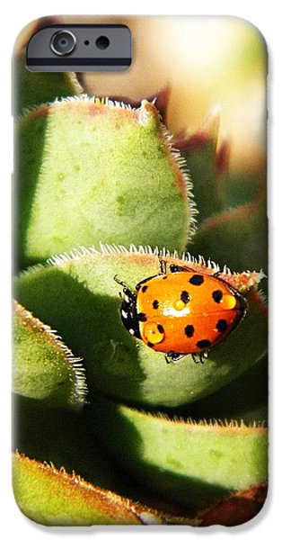 Ladybug and Chick iPhone Case by Chris Berry