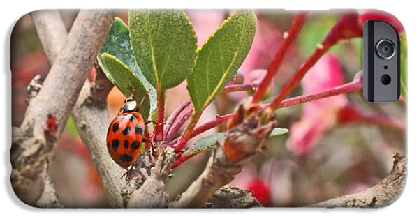 Tree iPhone Cases - Ladybug and Crabapple iPhone Case by Rona Black