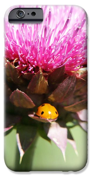 Ladybug and Thistle iPhone Case by Marilyn Hunt