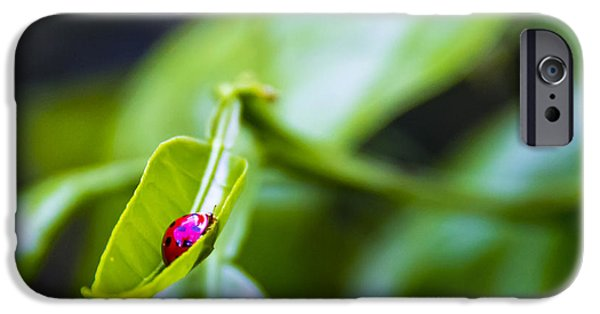 Tangerine iPhone Cases - Ladybug Cup iPhone Case by Marvin Spates