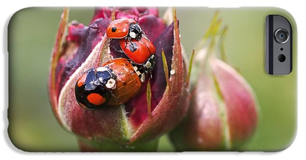 Ladybug iPhone Cases - Ladybug Foursome iPhone Case by Rona Black