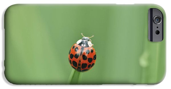 Meadow Photographs iPhone Cases - Ladybug on a grass haulm iPhone Case by Perry Wunderlich