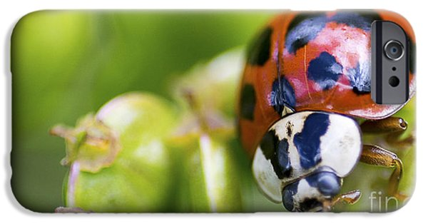 Bugs Pyrography iPhone Cases - Ladybug on a plant iPhone Case by Michael Bennett