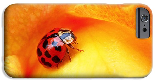 Insect iPhone Cases - Ladybug iPhone Case by Rona Black