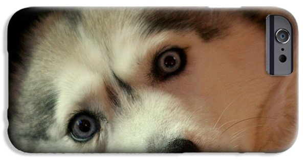Huskies Photographs iPhone Cases - Laika iPhone Case by Art Block Collections