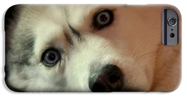 Husky iPhone Cases - Laika iPhone Case by Art Block Collections