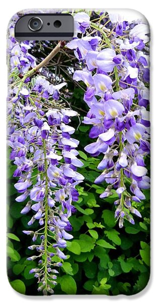 Will Borden iPhone Cases - Lake Country Wisteria iPhone Case by Will Borden