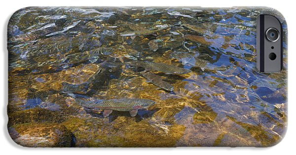 Wild Trout iPhone Cases - Lake Trout Art Prints Rainbow Trout Photography iPhone Case by Baslee Troutman