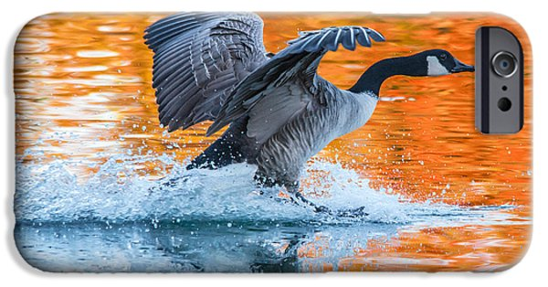 Wild Animals iPhone Cases - Landing iPhone Case by Parker Cunningham