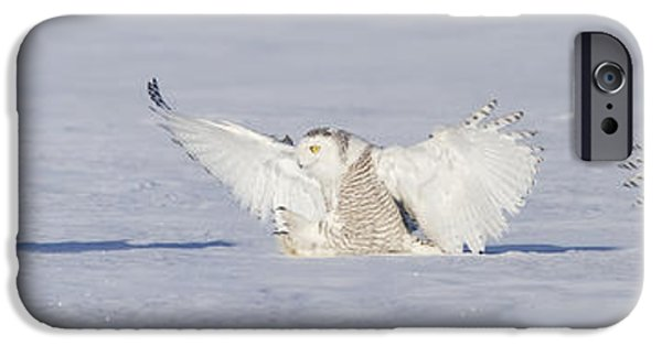Snowy Night iPhone Cases - Landing Snowy Owl iPhone Case by Mircea Costina Photography