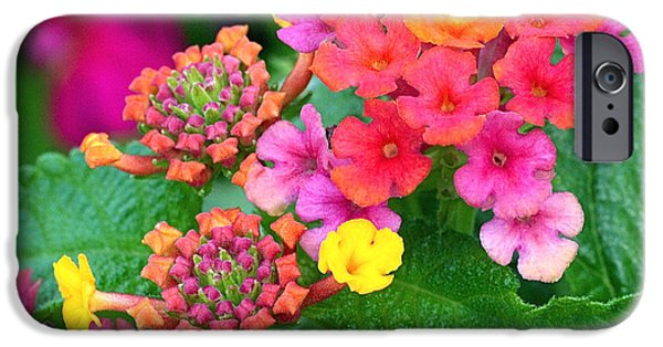 Red iPhone Cases - Lantana iPhone Case by Rona Black