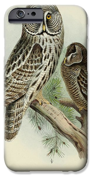 Colored Owls iPhone Cases - Lapp Owl iPhone Case by J G Keulemans