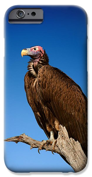 Watching iPhone Cases - Lappetfaced Vulture against blue sky iPhone Case by Johan Swanepoel