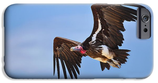 Wing iPhone Cases - Lappetfaced Vulture iPhone Case by Johan Swanepoel