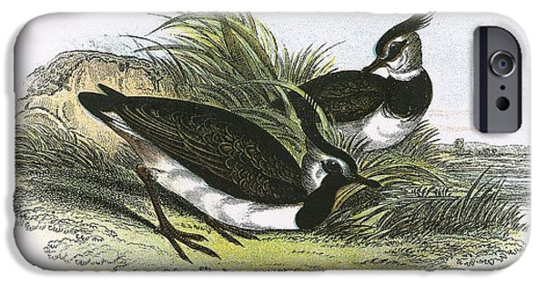 Lapwing iPhone Cases - Lapwing iPhone Case by English School