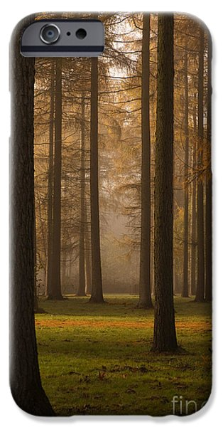 Larch Grove iPhone Case by Anne Gilbert