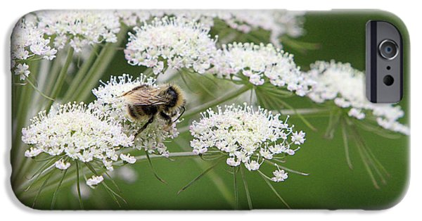 Insect Pyrography iPhone Cases - Large Bee on White Flowers iPhone Case by Shoal Hollingsworth