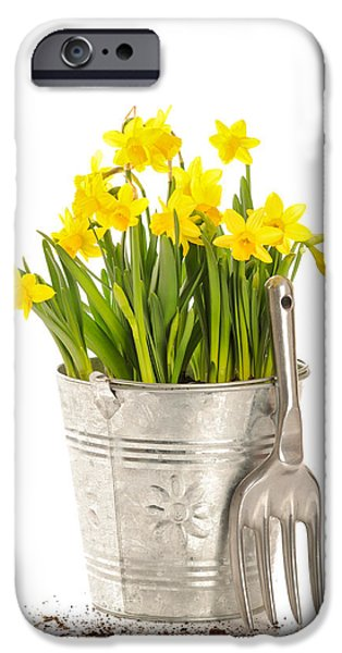 Work Tool iPhone Cases - Large Bucket Of Daffodils iPhone Case by Amanda And Christopher Elwell