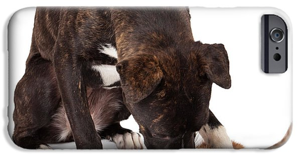 Pup iPhone Cases - Large dog playing with kitten iPhone Case by Susan  Schmitz