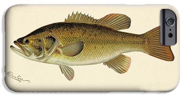 Gary Grayson iPhone Cases - Large Mouthed Black Bass iPhone Case by Gary Grayson
