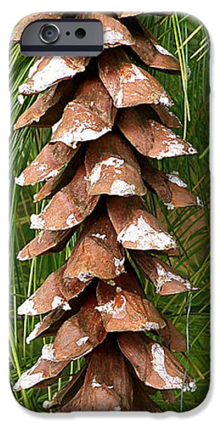 Christmas Greeting iPhone Cases - Large Pine Cone iPhone Case by Dennis Ninmer
