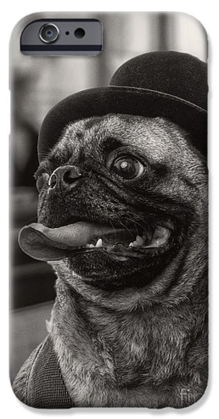 Black Dog iPhone Cases - Last Call Pug Greeting Card iPhone Case by Edward Fielding