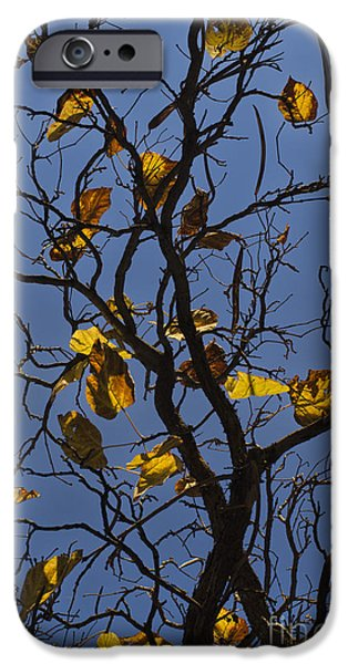 Chromatic Contrasts iPhone Cases - Last Leaves of Autumn iPhone Case by David Gordon