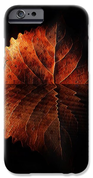 Autumn Leaf On Water iPhone Cases - Last Light On Water iPhone Case by Terril Heilman