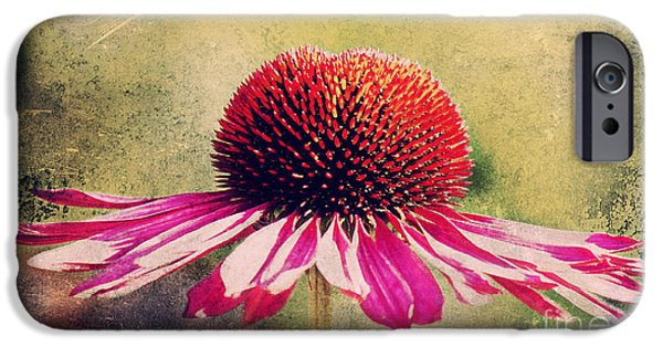Abstracted Coneflowers Mixed Media iPhone Cases - Last summer feeling iPhone Case by Angela Doelling AD DESIGN Photo and PhotoArt