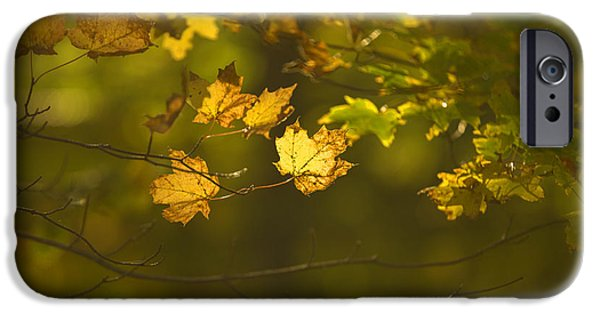 Autumn Foliage Photographs iPhone Cases - Late Autumn iPhone Case by Diane Diederich