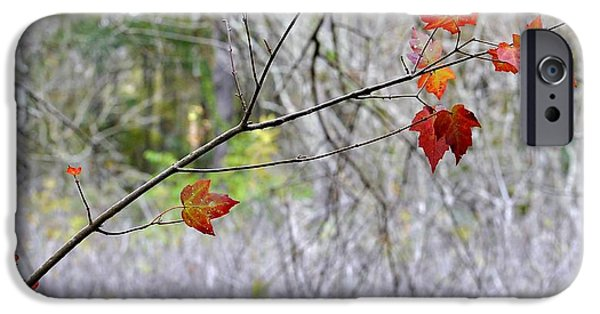Fall iPhone Cases - Late Autumn Stragglers iPhone Case by John Hintz