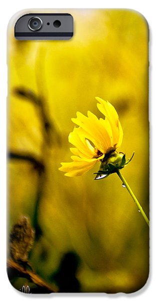 Late Summer Rain from the forest floor iPhone Case by Bob Orsillo
