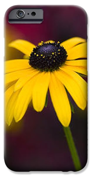 Late Summer Rudbeckia  iPhone Case by Tim Gainey