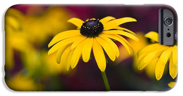 Abstracted Coneflowers iPhone Cases - Late Summer Rudbeckia  iPhone Case by Tim Gainey