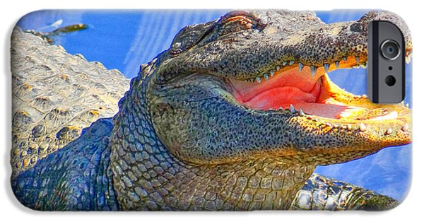 Smithsonian iPhone Cases - Laughing in the morning sun iPhone Case by Dennis Dugan