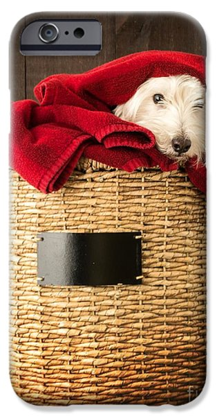 Dogs iPhone Cases - Laundry Day iPhone Case by Edward Fielding
