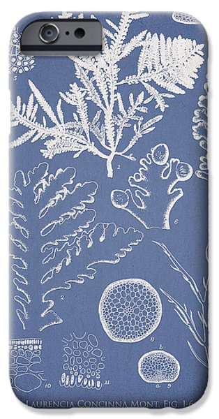 Algae iPhone Cases - Laurencia Concinna and Hypnea Musciformis iPhone Case by Aged Pixel
