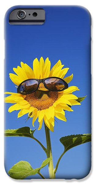 Freedom iPhone Cases - Laval, Quebec, Canada A Sunflower With iPhone Case by Perry Mastrovito