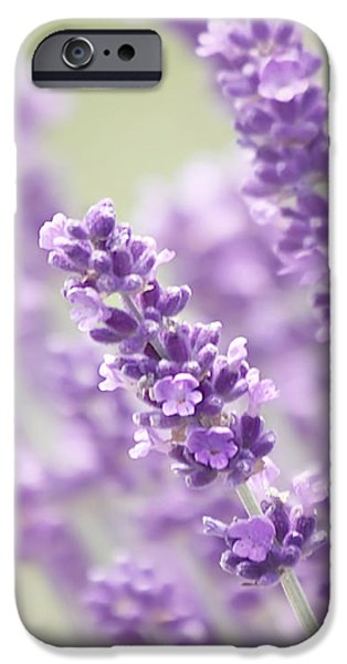 Lavender Dreams iPhone Case by Kim Hojnacki